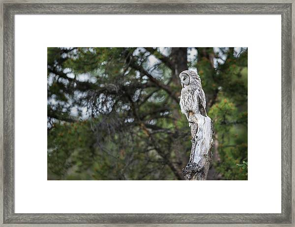 Framed Print featuring the photograph B17 by Joshua Able's Wildlife