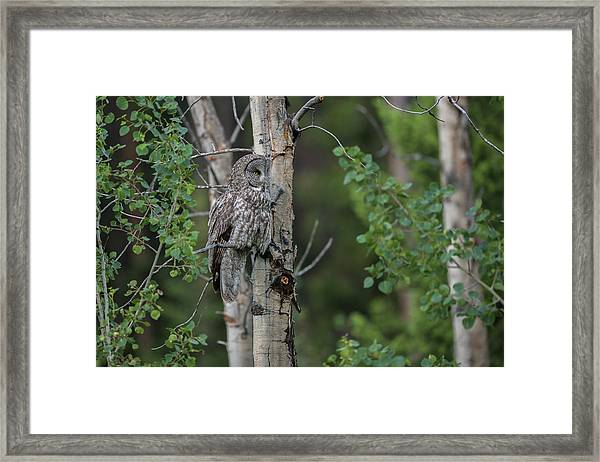 Framed Print featuring the photograph B18 by Joshua Able's Wildlife