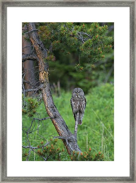 Framed Print featuring the photograph B20 by Joshua Able's Wildlife