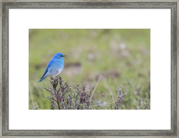 Framed Print featuring the photograph B23 by Joshua Able's Wildlife