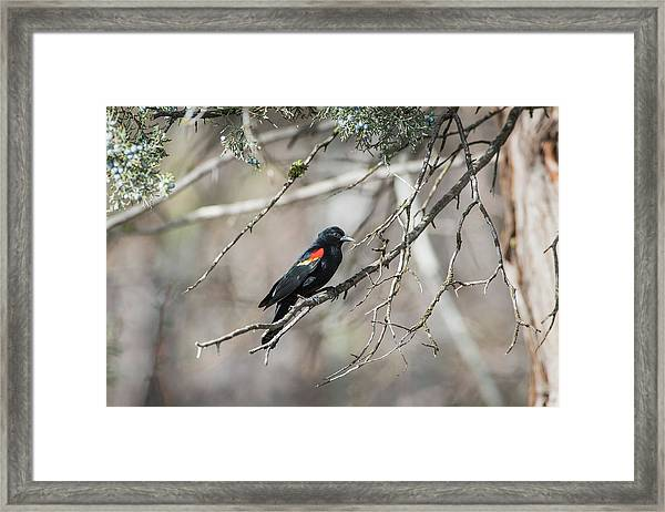 Framed Print featuring the photograph B26 by Joshua Able's Wildlife