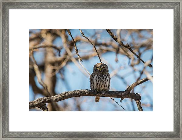 Framed Print featuring the photograph B34 by Joshua Able's Wildlife