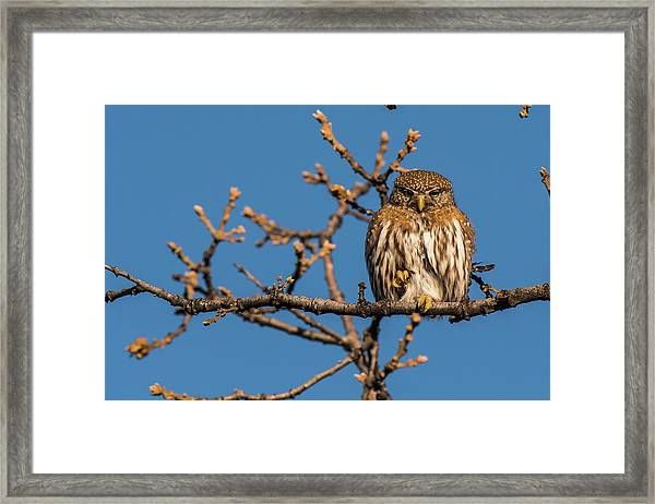 Framed Print featuring the photograph B37 by Joshua Able's Wildlife
