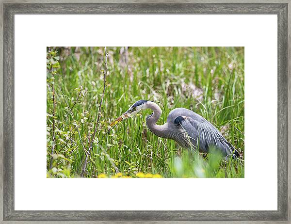 Framed Print featuring the photograph B40 by Joshua Able's Wildlife