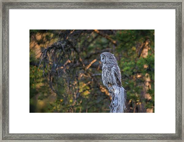 Framed Print featuring the photograph B46 by Joshua Able's Wildlife