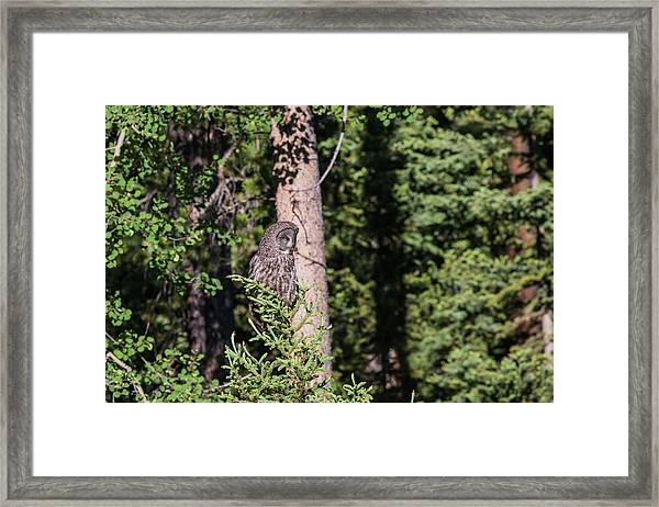 Framed Print featuring the photograph B50 by Joshua Able's Wildlife