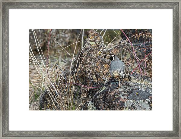 Framed Print featuring the photograph B53 by Joshua Able's Wildlife