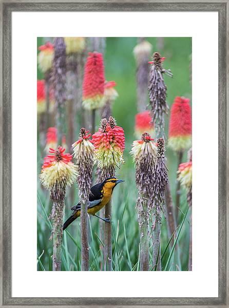 B58 Framed Print
