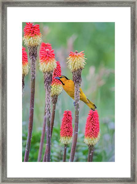Framed Print featuring the photograph B59 by Joshua Able's Wildlife