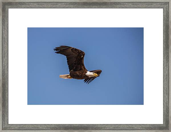 Framed Print featuring the photograph B8 by Joshua Able's Wildlife