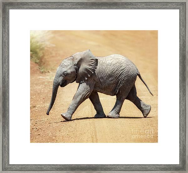 Baby African Elephant Framed Print