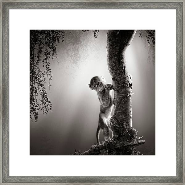 Baby Baboon Framed Print