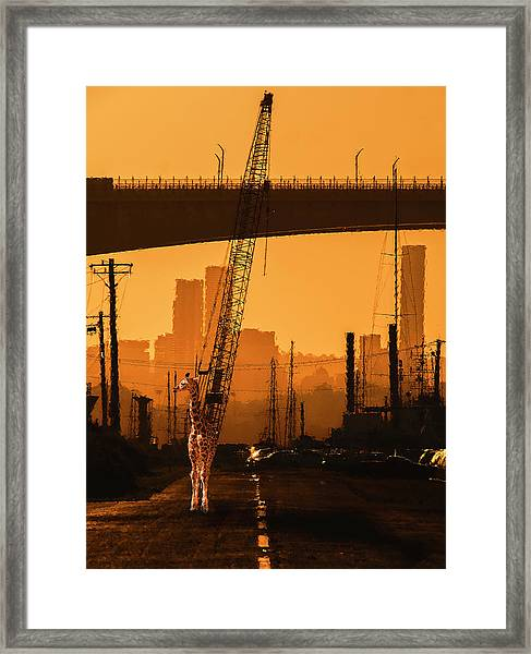 Framed Print featuring the photograph Baby Giraffe In The Urban Jungle. by Rob D Imagery