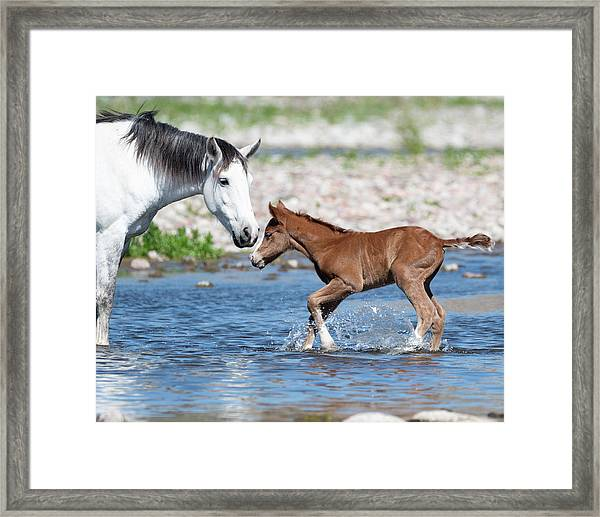 Baby's First River Trip Framed Print
