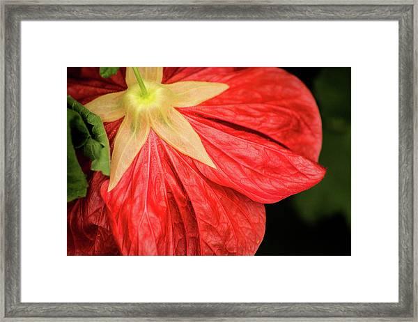 Back Of Red Flower Framed Print