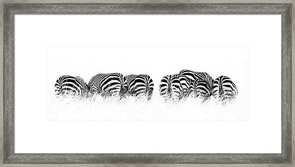 Back View Of Zebras In A Row  Horizontal Banner Framed Print