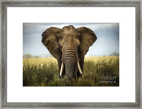Background Elephant Framed Print