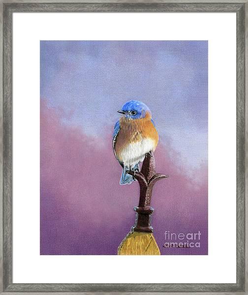 Backyard Bluebird Framed Print