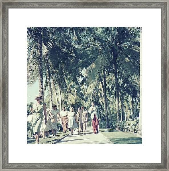 Bahamas Palm Trees Framed Print