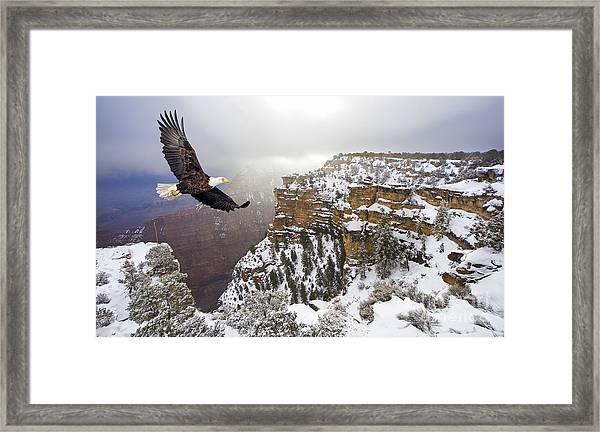 Bald Eagle Flying Above Grand Canyon Framed Print