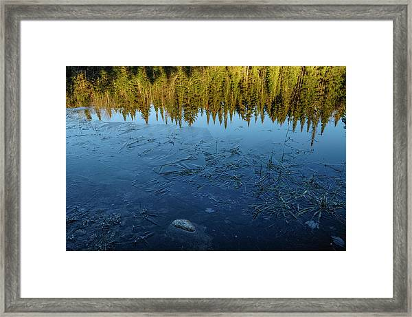 Balsam Fir And Ice Framed Print