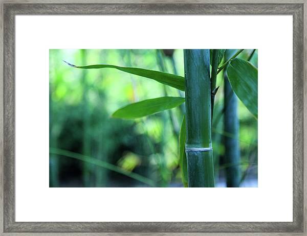 Bamboo 0321 Framed Print