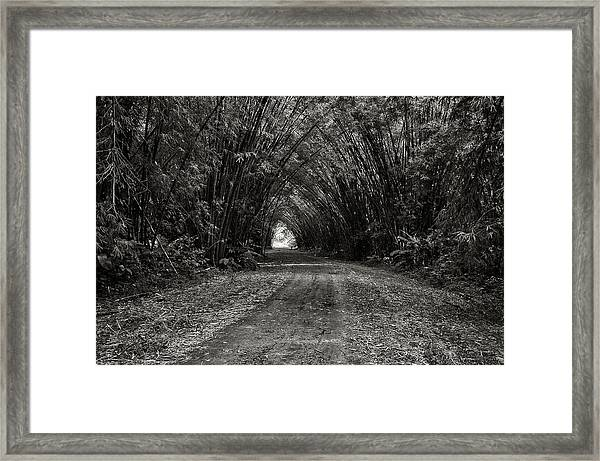 Bamboo Cathedral I Framed Print