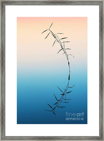 Bamboo Grass Reflection Framed Print by Tim Gainey