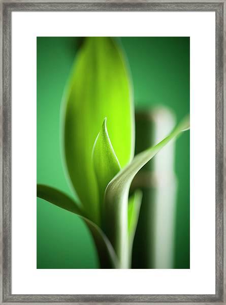 Bamboo Framed Print by Willselarep