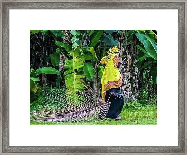 Banana Harvest, Zanzibar, Tanzania Framed Print