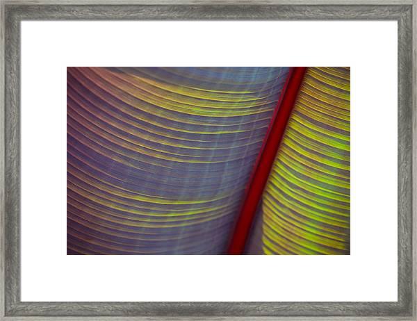 Banana Leaf 8597 Framed Print