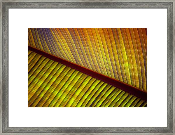 Banana Leaf 8602 Framed Print