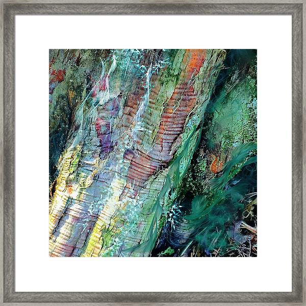 Bark L'verde  Framed Print