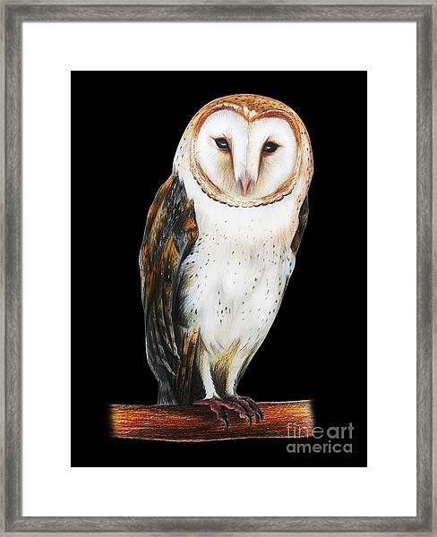 Barn Owl Drawing On Black Background Framed Print