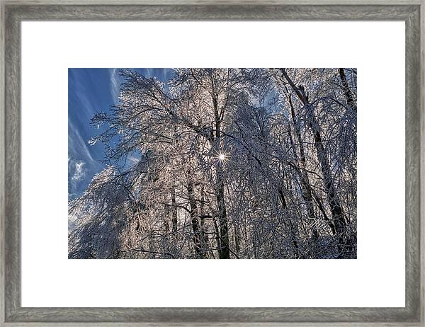 Bass Lake Trees Frozen Framed Print