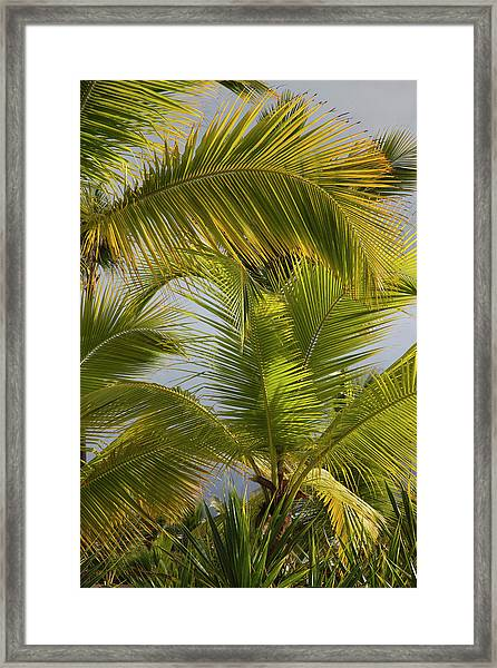 Beach Palms, Bavaro Beach, Bavaro Framed Print