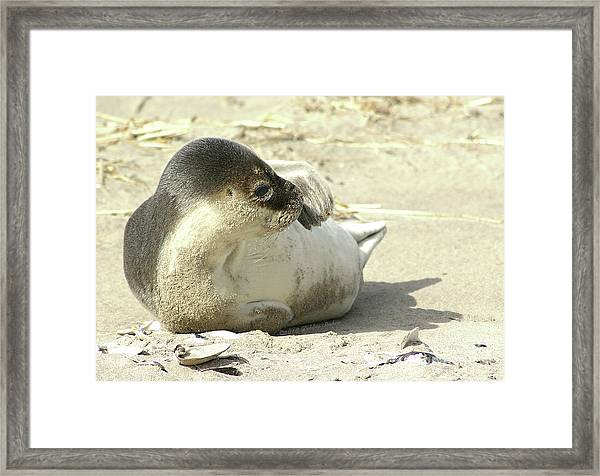 Beach Seal Framed Print
