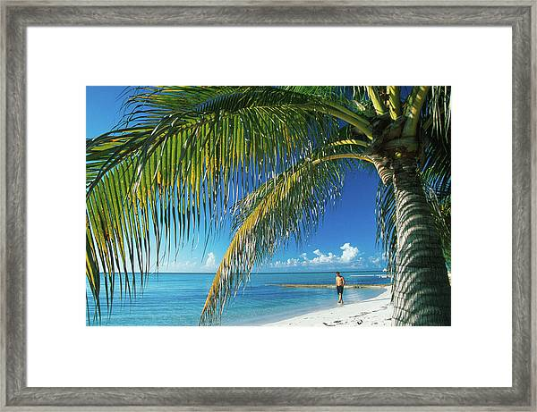Beach With Palm Tree At Rum Point Framed Print