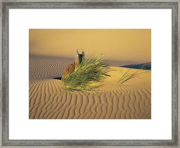 Beachgrass And Ripples Framed Print