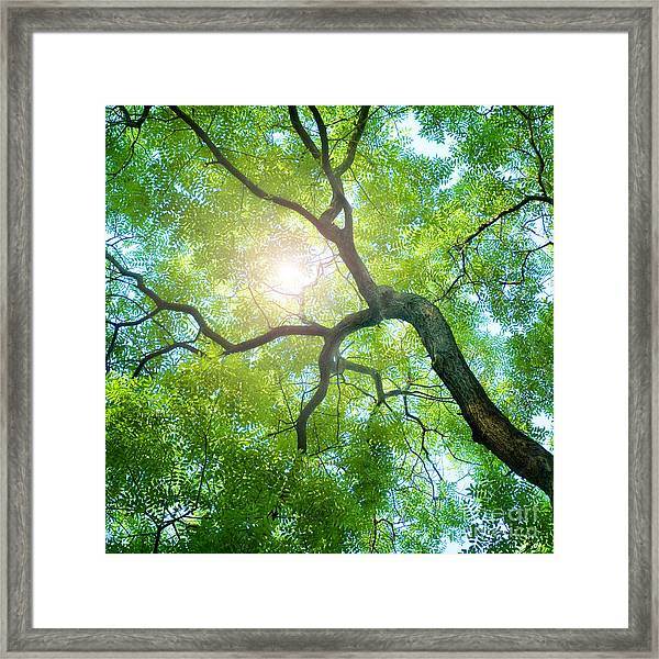 Beams Of The Sun Framed Print