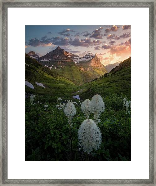 Bear Grass Bloom / Highline Trail, Glacier National Park  Framed Print