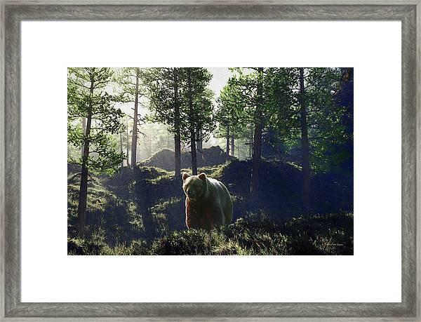 Bear In Forrest Framed Print