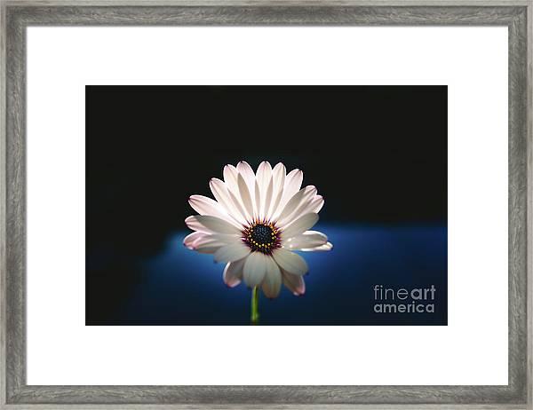 Beautiful And Delicate White Female Flower Dark Background Illum Framed Print