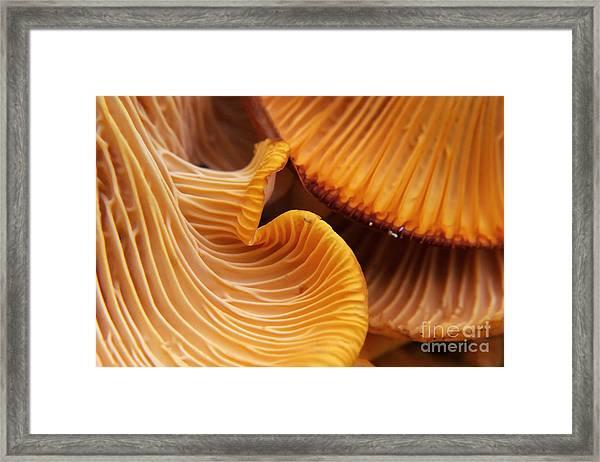 Beautiful And Very Bright, Orange Framed Print