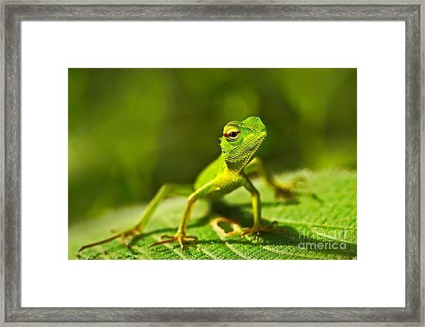 Beautiful Animal In The Nature Habitat Framed Print