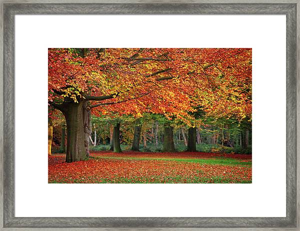Beautiful Autumn In Park Framed Print