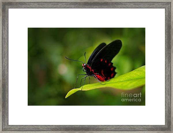 Beautiful Black And Red Poison Framed Print