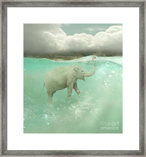 Beautiful Funny Elephant Swimmer Framed Print