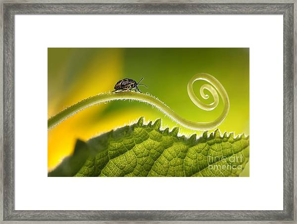 Beautiful Insects On A Leaf Close-up Framed Print