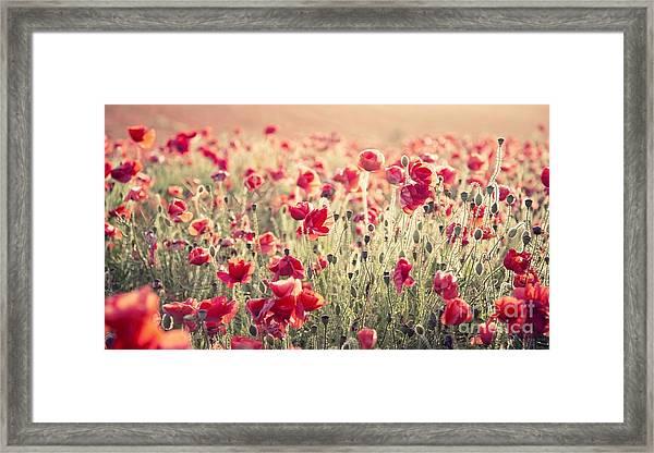 Beautiful Landscape Image Of Summer Framed Print